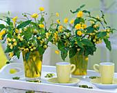 Lamium (yellow archangel), Ranunculus acris (Buttercup)