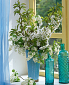 Prunus, branches of bird cherry and cherry in blue vase