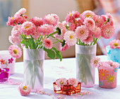 Bellis 'Roggli rosa' (daisies, small glass)