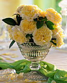 Rose 'The Pilgrim' (English fragrance rose)