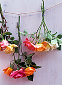 Pink, historic roses flowers under glass bell