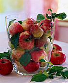 Malus (apple) in the champagne cooler, ornamental apples as decoration