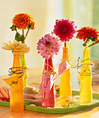Dahlia in colorful plastic bottles, name tags tied with wire