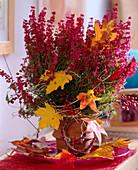 Erica gracilis, decorated with Acer, Liquidambar