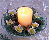Wreath made of Cupressus arizonica (Arizona cypress)