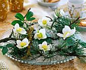 Helleborus niger Christmas roses, Pinus pine, twigs, silver angel hair