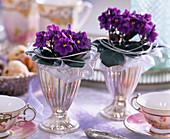 Saintpaulia ionantha-purple African Violet in silver ice cream cups