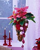 Hanging Basket with Euphorbia pulcherrima (Poinsettia)