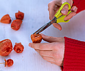 Physalis fairy lights: 1/3. Physalis (lanterns) Cut out the stalk and the fruit with scissors