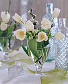 Tulipa (white tulips)