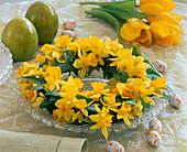 Narcissus 'Soleil D'Or', 'Tete À Tete' (Daffodil)
