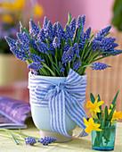 Muscari 'Blue Pearl' (Grape Hyacinth)