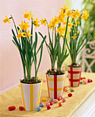 Decorating planters with insulating tape (2/2)