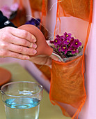 Watering African violet in a bag band