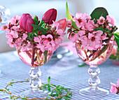 Bergenia (Bergenie), Tulipa (Tulip)
