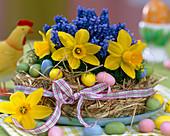 Straw wreath with Narcissus (Daffodil)