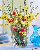Forsythia, Tulipa (yellow-red tulip)