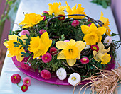 Moss wreath with Narcissus (Daffodil)