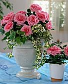 Bowl with rose 'Rosavova', very fragrant