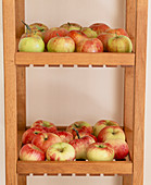 Malus (apple) stored on the shelf