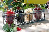 Freshly picked berries in preserving jars lined up in bottle carrier