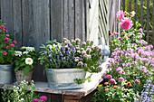 Origanum 'Compactum' (oregano), Lavandula (lavender) and Salvia