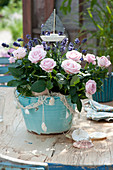 Pink (rose) and Lavandula (lavender) in turquoise planter