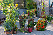 Gravel terrace with summer flowers, vegetables and herbs