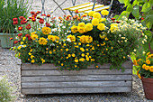 Homemade wooden box planted with summer flowers
