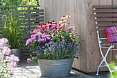 Echinacea purpurea, Lavandula, Monarda