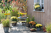 Autumn terrace with grasses and chrysanthemums