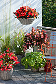 Shadow balcony with Begonia, Hosta (Funkie), Impatiens