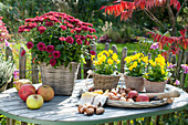 Autumn still life on garden table, Chrysanthemum indicum