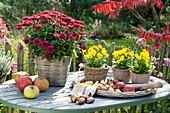 Autumn still life on garden table, Chrysanthemum indicum