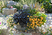 Zinc tub with summer flowers, Calibrachoa Aloha Kona 'Mango'
