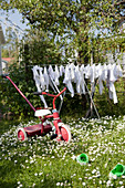Old baby's tricycle and clothes horse on lawn dotted with daisies