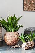 Grünpflanzen in kreativ gestalteten Übertöpfen aus Naturmaterialien auf grauem Fliesenboden