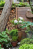 White rhododendron and foliage plants in front of stacked firewood and screen fence in garden