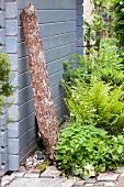 Rabatte mit Farn, Vergissmeinnicht und weissen Blumen neben Gartenhäuschen mit angelehnter Baumrinde