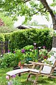Wooden lounger and flowering tulips in garden