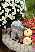 Stone cherub and ornamental squashes in planter of October Daphne