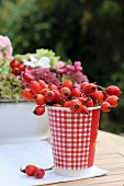 Rose hips in red and white gingham-patterned paper cup