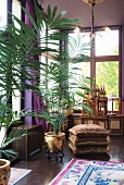 Potted palms in gold pots in drawing room
