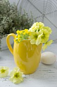 Auricula primroses in yellow ceramic jug