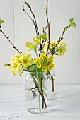 Spring arrangement of sprigs of primulas in glass vases