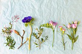 Flowers for spring arrangement laid out on pale blue tissue paper
