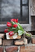 Bunch of red tulips tied with string