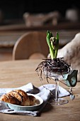 Hyacinth in nest of twigs in Champagne saucer with bird ornament