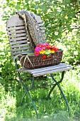 Korb mit bunten Zinnien und bedruckte Decke auf Klappstuhl im Garten