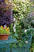 Delicate metal garden furniture amongst flowering shrubs